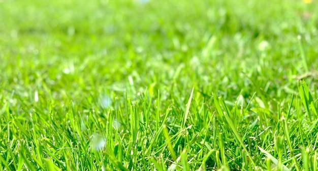 美しさのボケ味と抽象的な自然の背景。新鮮な草のそばの完璧な緑の背景