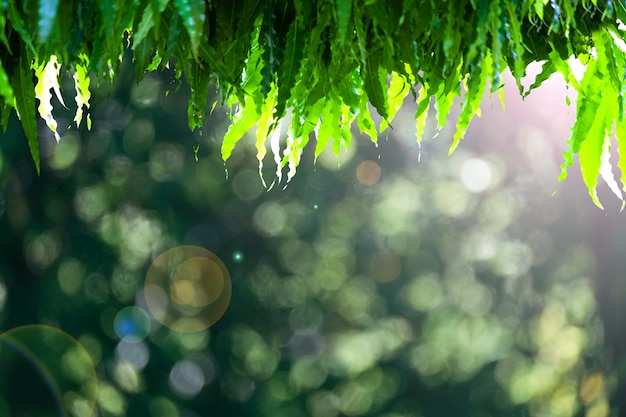 Abstract natural green bokeh from tree background.