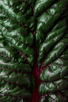 Abstract nature background. fresh mangold salad leaf. macro shot. plant texture. low key. top view