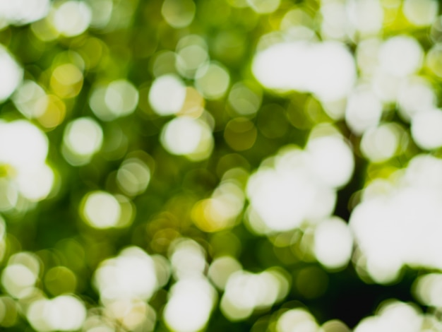 Abstract nature background,green bokeh from tree
