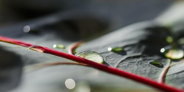 水滴と抽象的な自然の背景マクロクロトン植物の葉