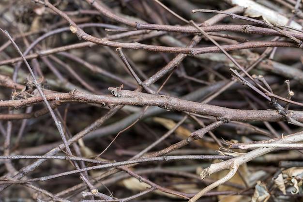 乾燥した木の根の抽象的な自然背景テクスチャ。