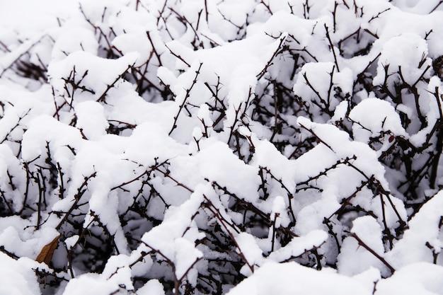 Аннотация снега на кустах. закройте вверх снега покрывая ветви малого куста.