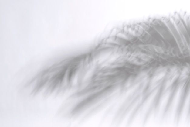 Abstract palm leaf and shadow reflection on white background.