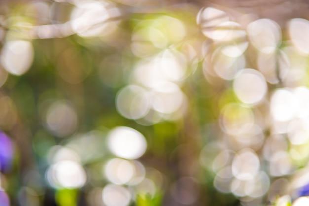 焦点がぼけたぼかしの明るい円を持つ抽象的なパステルグリーンのボケ味。