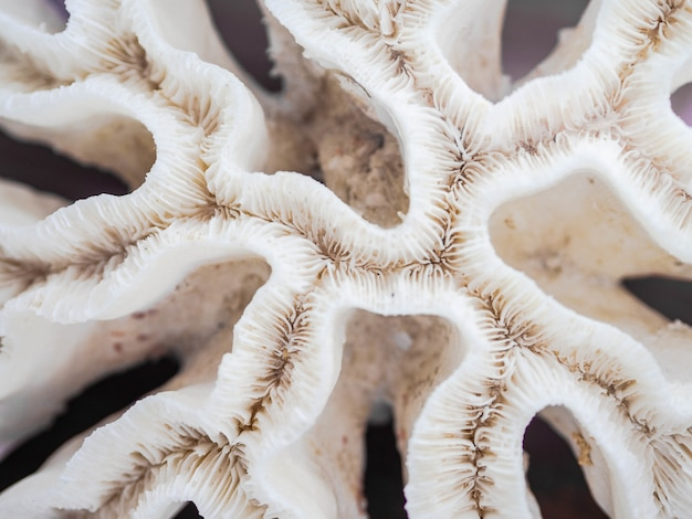 Abstract pattern of white dead coral
