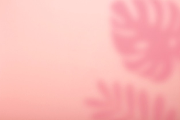 Abstract pink background and shadow of tropical monstera plant.