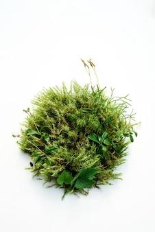 抽象的な植物の背景、森の苔からの自然化粧品のための生きている表彰台