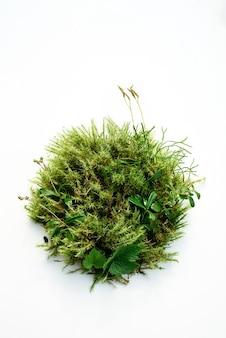 Abstract plant background, living podium for natural cosmetics from forest moss