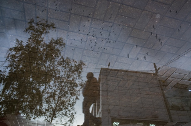Abstract reflection of a city street in a rainy puddle flying birds