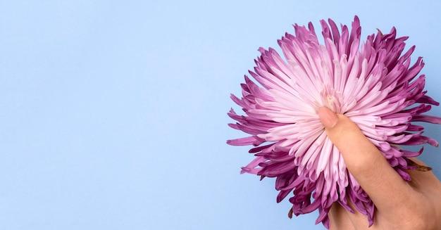 꽃과 추상 성 건강 구성