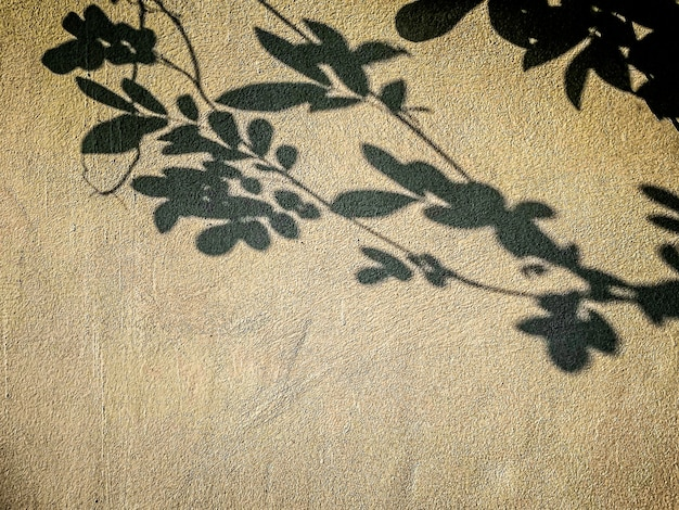 Abstract shadow background of natural leaves tree branch falling on wall