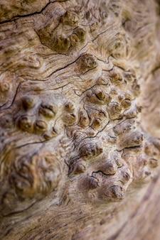 오래 된 나무의 껍질을 보여주는 추상
