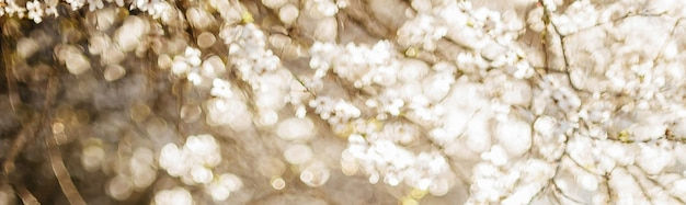 Abstract spring blurred space with bokeh effects