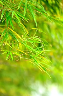 Abstract spring green background with bamboo leaves