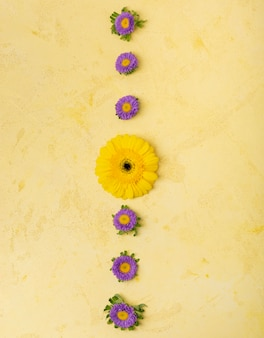 Abstract stripe of yellow and violet daisies