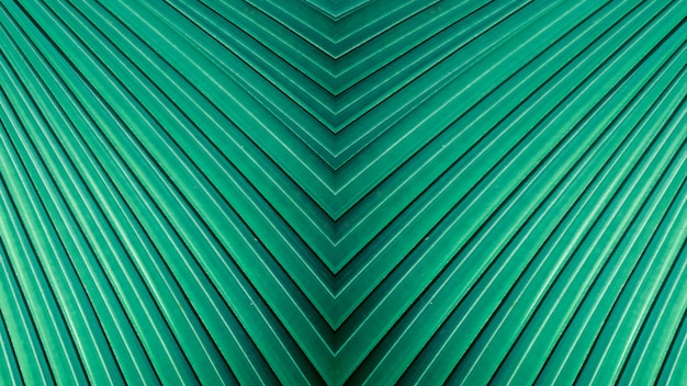 Abstract teal green stripes from nature, tropical palm leaf background.