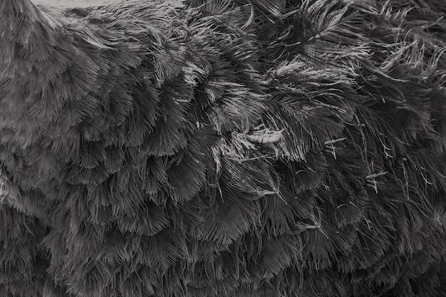 Абстрактный фон текстуры из страусиного пера. тонированный в черно-сером