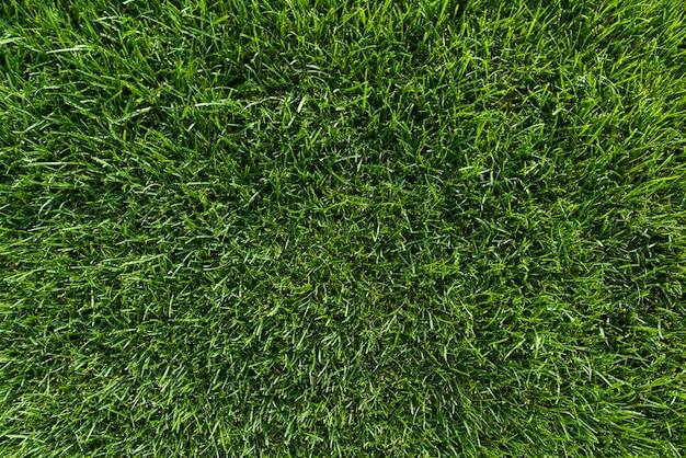 抽象的なテクスチャ背景、自然の明るい緑の草
