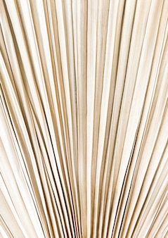 Абстрактная текстура сухих пальмовых листьев пампасов.