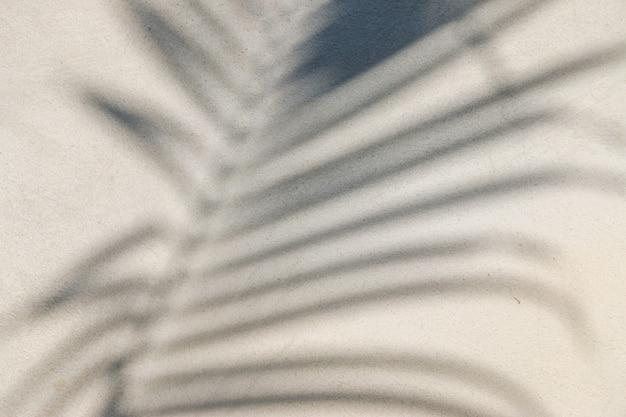 コンクリートの壁に影の葉の抽象的なテクスチャ