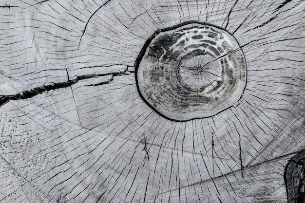 木の切り株の抽象的なテクスチャ、古代の木を割る-画像