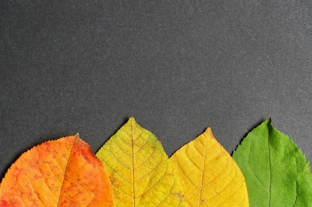 スペースのコピーで乾燥した葉と背景から秋の概念を抽象化します。