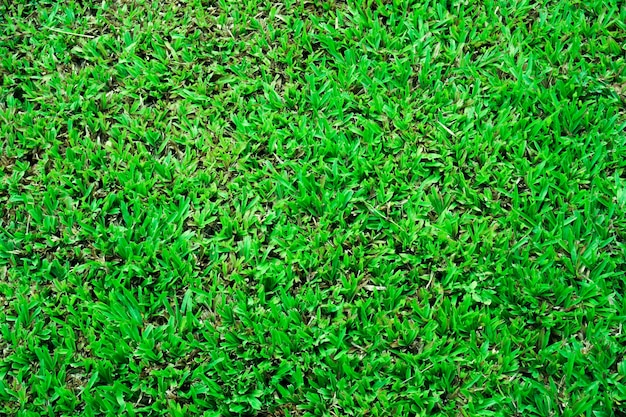 Abstract  top view green color of grass background texture ,for background