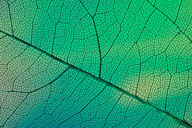 Abstract transparent leaf veins with green