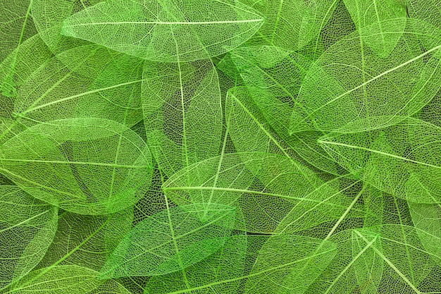 Abstract transparent leaves texture