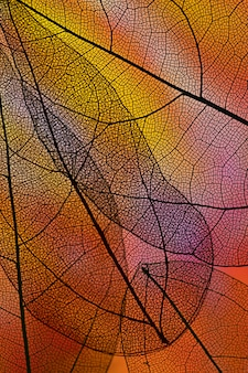 Abstract transparent leaves with red backlight