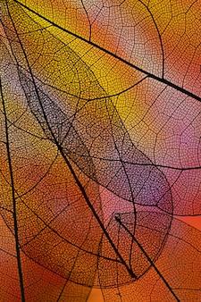 赤いバックライト付きの抽象的な透明な葉
