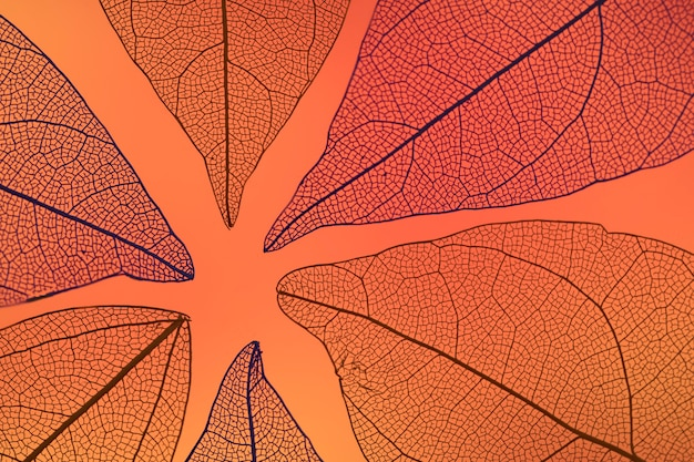 Abstract transparent orange fall leaves