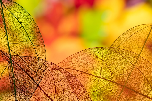 Abstract transparent orange leaves