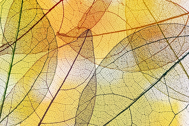 Abstract transparent yellow leaves