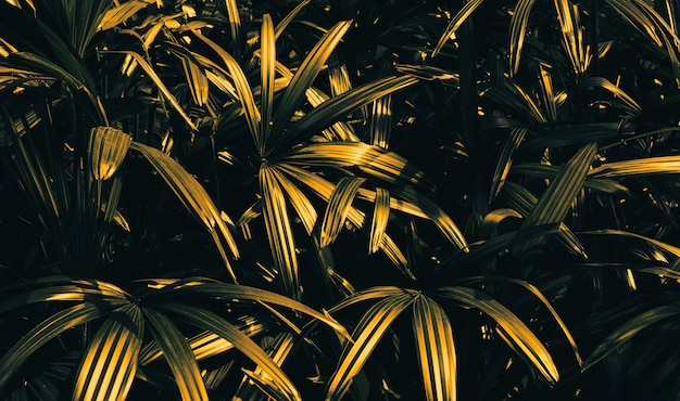 Abstract tree leaf in gold background.nature concepts design.