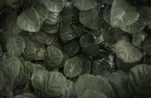 抽象的な熱帯の緑の葉のテクスチャと背景