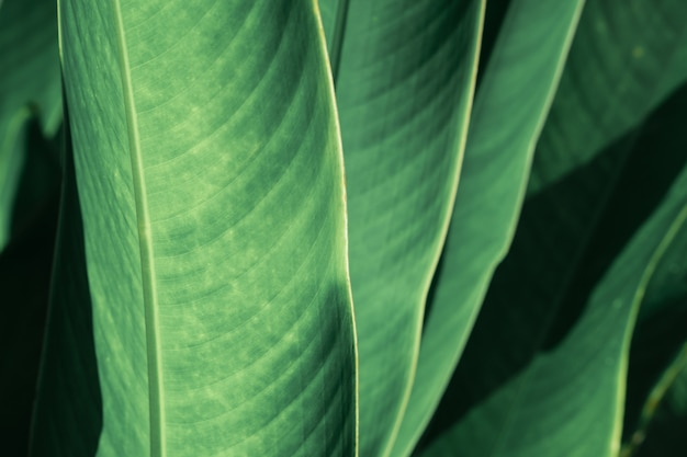 Abstract tropical green leaf textured background