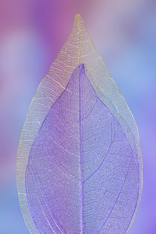 Abstract vibrant colored autumn leaf