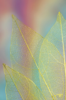 Abstract vibrant colored autumn leaves