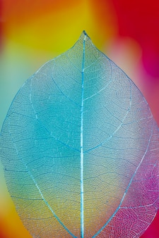 Abstract vivid colored autumn leaf