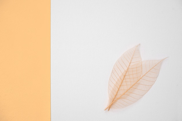 Abstract white background for design with yellow paper and leaves. view from above.