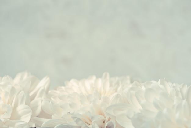 국화 꽃과 추상 흰색 흐린 된 표면