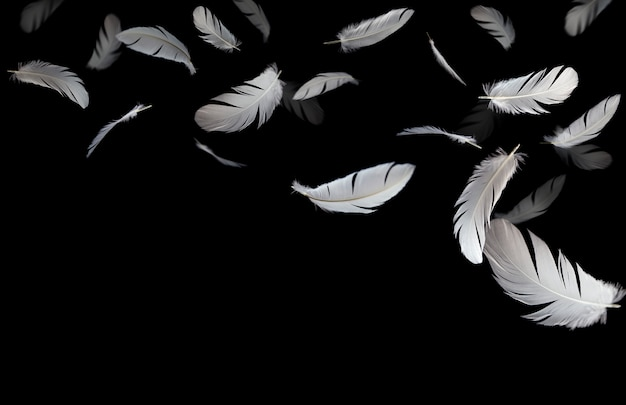 Abstract, white feathers bird floating in the dark.