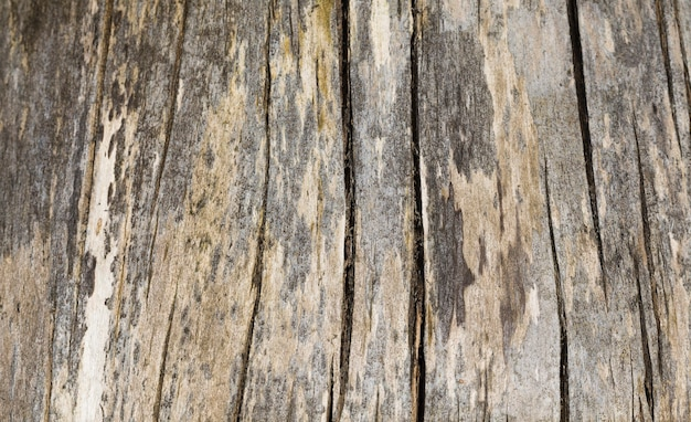 Abstract wooden surface, details and structure of wood of different degree of use and wear