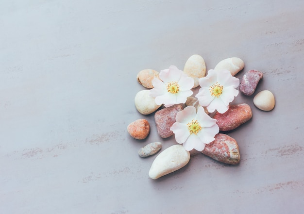 Abstraction of pink stones and flowers on a gray background with space for text, top view