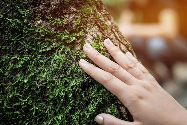 Изобилие леса женщины растирают зеленый мох на дереве.