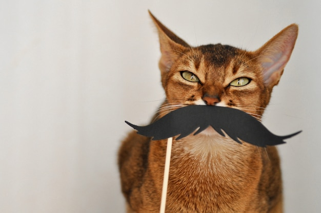 Abyssinian cat with a paper mustache on a white background