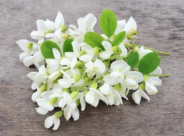 Цветы акации с листьями на белом