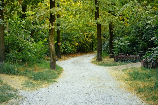 The access road from gravel in the trees on a sunny summer day